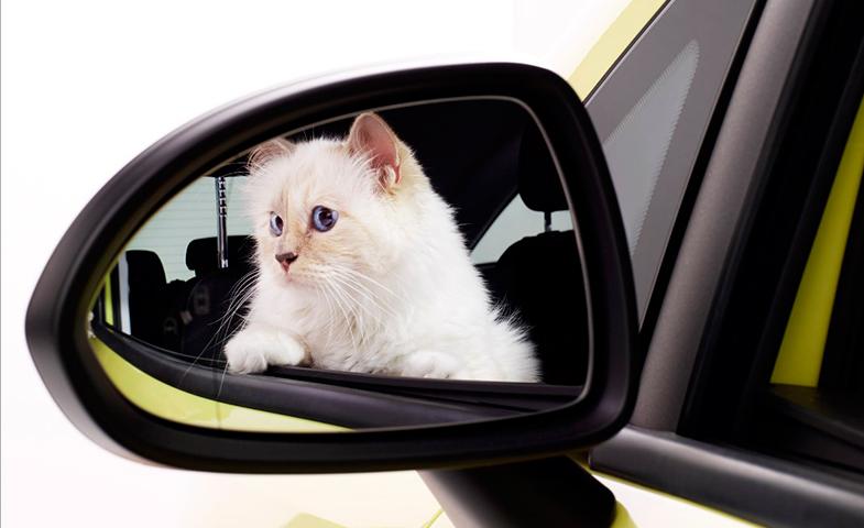 Como está acostumbrada a viajar, se ve que no se marea en el coche.  © Cortesía de Opel