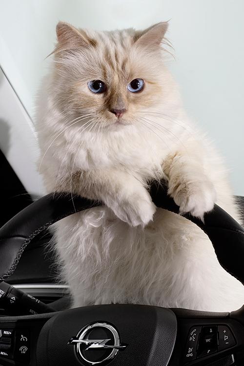 Además de columnista y diseñadora... ¿también sabrá conducir?  © Cortesía de Opel