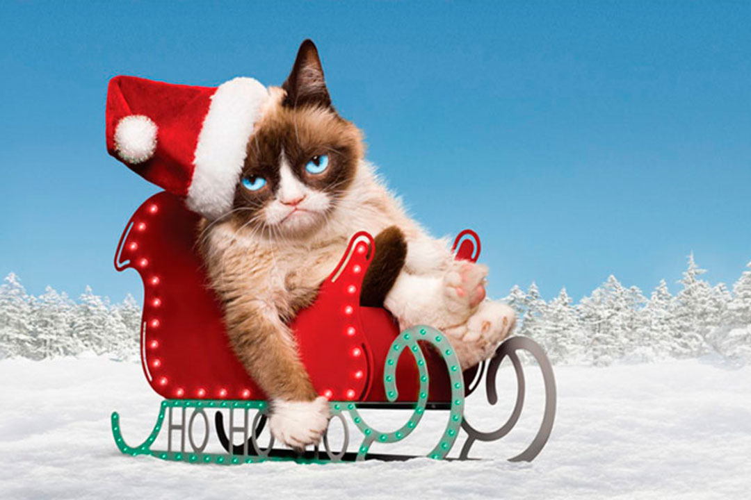 gru635505389609996779-grumpy-cat-christmas