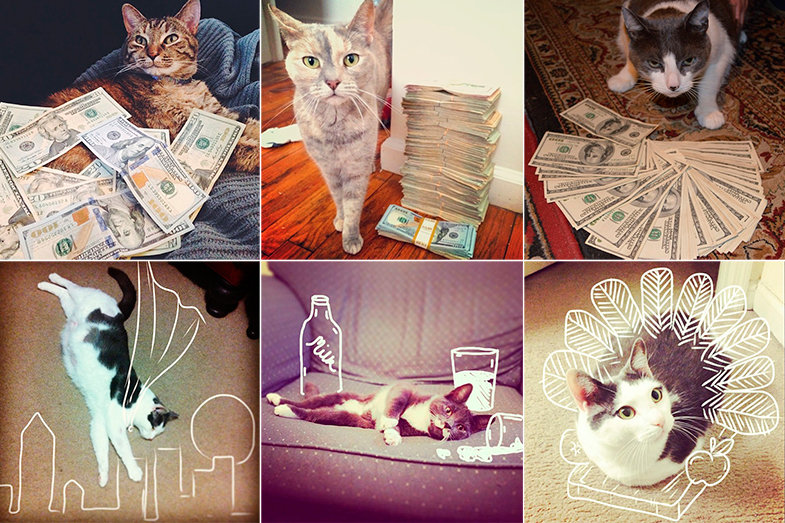 Los gatos son los reyes de Instagram, es así. Gatos ricos en @cashcats y decorados en @idraw_on_cats.