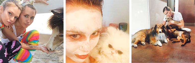 De izq. a dcha. Miley con su novia Stella Maxwell y un pony, Miley con su gatito persa y Miley con su coro de perros. / © IG @mileycyrus
