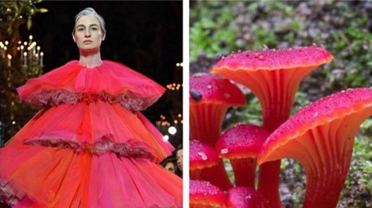 Hay una cuenta de Instagram que demuestra que la moda siempre imita la naturaleza