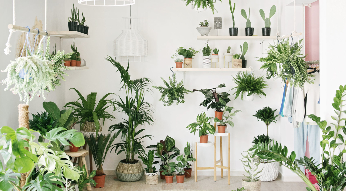 HERE ARE THE BEST PLACES TO BUY PLANTS IN THE UAE - Grazia Middle East