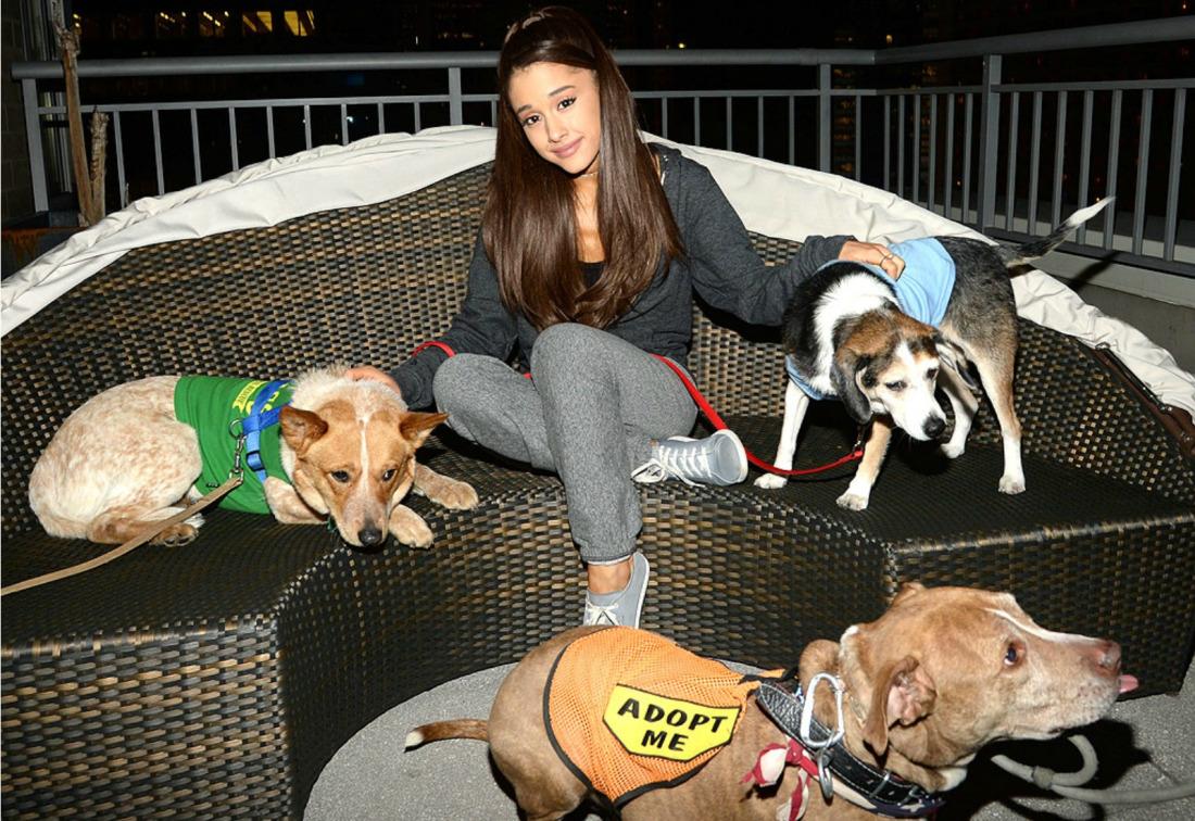 Ariana Grande abre su propio centro de rescate y adopción de perros y gatos