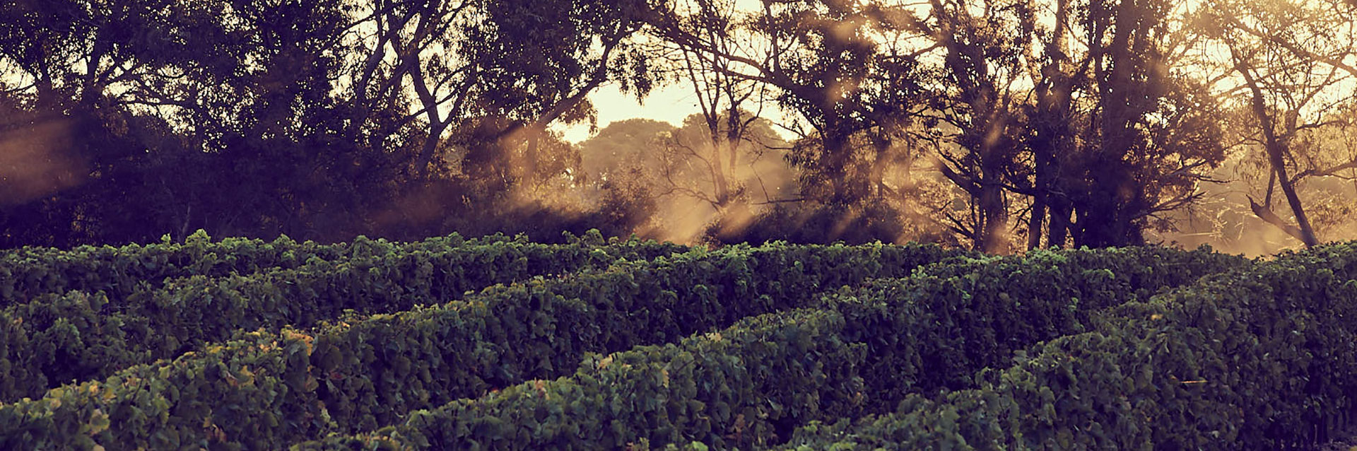 Llega la añada 2020 de Domaine de L'Ile, la vinícola de Chanel