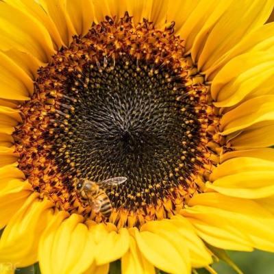 Apicultura, un hogar para las abejas en México y un proyecto que nos une a todos