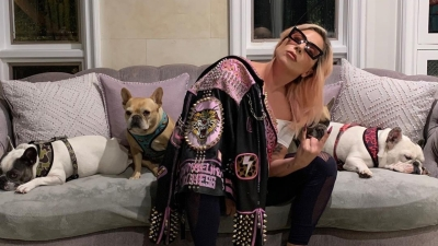 Lady Gaga's dogs