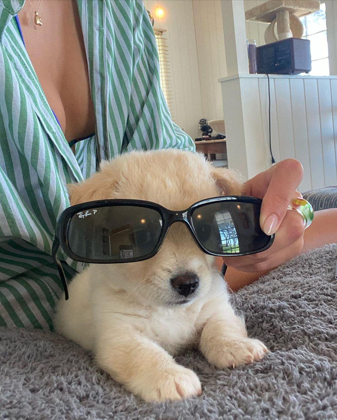 kaia gerber puppy